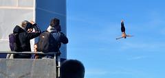 Shooters (Owen J Fitzpatrick) Tags: people photography nikon fitzpatrick ojf ireland dublin pretty republic pavement candid joe use only editorial owen chasing d3100 ojfitzpatrick woman beautiful beauty lady female j photoshoot natural attractive unposed along candidphoto candidphotography street ladies girls portrait irish girl face digital women streetphotography photograph streetphoto capture streetshoot tower portraits photos extreme diving shooter candids beauties shooters captures photographers dive