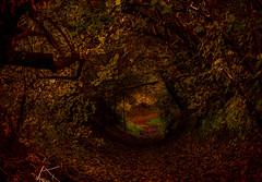 Autumn (ost_jean) Tags: nature nikon d5300 tamron sp 90mm f28 di vc usd macro 11 f004n ostjean