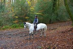 """Rider on the Storm"" (Adam Swaine) Tags: horse animals woodland woodlandfloor trees autumn autumncolours autumnviews leaves hants naturelovers nature nationaltrust england english britain british uk ukcounties counties countryside adamswaine seasons canon 2019"