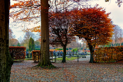 Beyond Autumn (Alfred Grupstra) Tags: autumn tree leaf nature season parkmanmadespace yellow multicolored outdoors forest october red scenics footpath landscape colors beautyinnature orangecolor alley mapletree graveyard