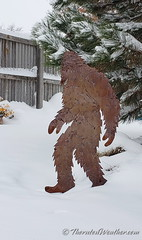 November 26, 2019 - Sasquatch emerges as the storm winds down. (ThorntonWeather.com)
