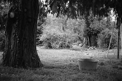 Penser à rentrer le bois pour l'hiver... (woltarise) Tags: france film summicron arbres campagne argentique leicam6 ilforddelta100 250mm dauphiné jardinparc