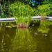 2019 - Mexico - Cuernavaca - 37 - MMAC Sculpture Garden Pond