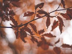 Lumières d'automne. Derniers feux. (Virgille77) Tags: pourpre