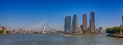 Rotterdam (pe_ha45) Tags: rotterdam maas erasmusbridge niederlande