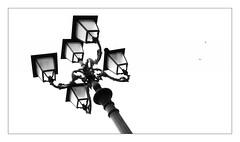 Sassari's Swallows (endresárvári) Tags: canon swallow sassari sardinia sardegna lamp lamppost candelabra sky bw blackandwhite italian italy highkey