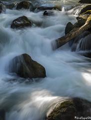 Torrent de montagne (penelope64) Tags: olympusem1 pyrénées pyrénéesatlantiques béarn montagne mountain rivière river poselente