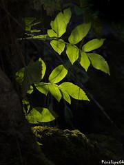 Lumière (penelope64) Tags: olympusem1 pyrénées pyrénéesatlantiques béarn montagne mountain automne