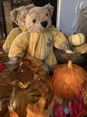 Patrick Says Happy Thanksgiving! (BKHagar *Kim*) Tags: bkhagar patrick pumpkin decoration thanksgiving htbt mirror bear teddy teddybear happythanksgiving