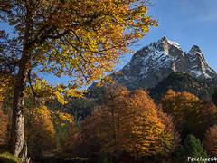 L'Ossau (penelope64) Tags: olympusem1 pyrénées pyrénéesatlantiques béarn montagne mountain picdumididossau ossau automne forêt forest