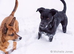 November 26, 2019 - Snow dogs in Thornton! (Michelle Jones)