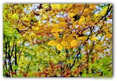 AUTUMN COLOURS (Maarten Kleijkamp) Tags: bladeren leaves kleuren colors colours autumn herfst nature