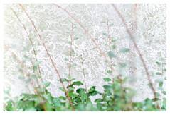 Patterns on the wall (leo.roos) Tags: lens 90 russ muur solaag wall pattern mf arsenal pentaconsix kiev60 pentacon6 vega12b2890 vega9028 вега12б2890 a7rii mediumformat darosa russianlenses sovietglass leoroos