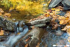 Ricketts Glen Cascade and Fall Reflection (freshairphoto) Tags: ricketts glen state park waterfall cascade leavesrocks reflection autumn fall pa artspearing nikon d80 2470zoom tripod