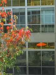 reflection on fall (Riex) Tags: tree arbre fall autumn automne leaves leaf feuilles rouge red umbrella parasol vitres fenetres reflections reflet façade bâtiment building architecture patio glass california californie g9x
