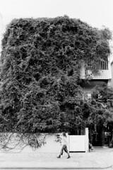 191111_2_204 (taocoffee) Tags: film monochrome ultron foma400