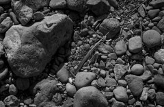 Placement (bingley0522) Tags: nikkormatftn micronikkor55mmf35 fp4 ilfordfp4 diafine epsonv500scanner pescaderostatebeach coastalcalifornia beach feather autaut