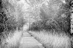 Memories... (Ody on the mount) Tags: anlässe bäume em5 landschaft mzuiko6028 nebel omd olympus pflanzen schwarzwald wanderung weg bw blackforest blackandwhite fog landscape monochrome sw schwarzweis trees way gernsbach badenwürttemberg deutschland