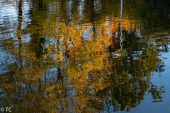 Reflectie in herfsttinten/Reflections in fall hues (truus1949) Tags: water reflectie herfst