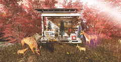 Autumn sanctuary with lovely visiter ♥ (Kumomi) Tags: thor hellotuesday yourdreams cosmopolitan jinx littlebranch