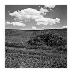 Wspomnienie Lata 2013 (5) (4Rider) Tags: warmia północ north landscape krajobraz pejzaż photoartist drzewo drzewa tree trees las forest poems poetry
