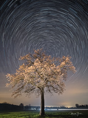 Allgäu night (Martin Zurek) Tags: landscape tree explore startrails night nigthphotography bavaria bayern germany deutschland udo menschenaffe leinau irsee pforzen sky illumination shadow ostallgäu allgäu