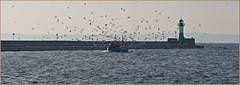 Heimkehr des Fischers (der bischheimer) Tags: ostsee baltic fischer kutter leuchtturm sasnitz mole möwen rügen mecklenburgvorpommern canon derbischheimer