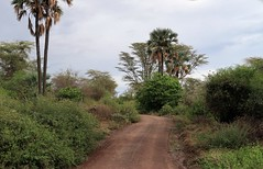 2019-101331 (bubbahop) Tags: 2019 africatrip gadventures tanzania lakemanyara national park safari part2