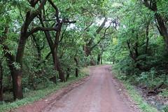 2019-101330 (bubbahop) Tags: 2019 africatrip gadventures tanzania lakemanyara national park safari part2