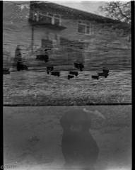 Upside down world (Uta_kv) Tags: 6x45 ilfordfp4 blackandwhitebnw push400 fp4 expiredfilm zeissikon d76