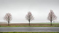 Tree Study (Bernd Walz) Tags: trees tree road fieldscape landscape allee emptiness minimalistic minimalism transformedlandscape artificiallandscape rural countryside fog mist vastness