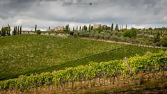 Vineyards near Vertine (cedant1) Tags: italy italia toscane toscany picturesque europe europa siena gaiole chianti nikon nikond750 afs24120f4 clouds village grapes field