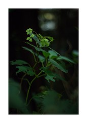 This work is 6/12 works taken on 2019/10/20 (shin ikegami) Tags: sony ilce7m2 a7ii sonycamera 50mm lomography lomoartlens newjupiter3 tokyo 単焦点 iso800 ndfilter light shadow 自然 nature naturephotography 玉ボケ bokeh depthoffield art artphotography japan earth asia portrait portraitphotography