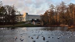 View of the Palace and Karpin bridge. (anytime-anywhere) Tags: gatchina palace autumn nikon 2019 november park