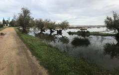 Petite Camargue les pieds dans l'eau et les moustiques  sont de retour !!! IMG_7991 (6franc6) Tags: occitanie languedoc gard 30 petitecamargue novembre 2019 6franc6 vélo kalkoff vae