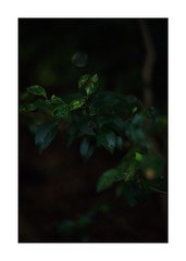 This work is 9/12 works taken on 2019/10/20 (shin ikegami) Tags: sony ilce7m2 a7ii sonycamera 50mm lomography lomoartlens newjupiter3 tokyo 単焦点 iso800 ndfilter light shadow 自然 nature naturephotography 玉ボケ bokeh depthoffield art artphotography japan earth asia portrait portraitphotography