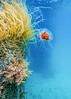 Jelly Fish-1