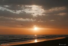 COMINCIA IL GIORNO. (Salvatore Lo Faro) Tags: natura nature mare oceano acqua adriaticosole rosso nuvole spiaggia gabbiano risacca alba mattino cielo nubi lidodelsole puglia italia rodi garganico salvatore lofaro panasonic l100 lumix