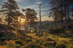Glen Affric at Sunrise (MilesGrayPhotography (AnimalsBeforeHumans)) Tags: 24105 sonyfe24105mmf4goss nd formatthitech sonya7rii ilce7rm2 sonyilce7rm2 glenaffric britain forest caledonianforest caledonianpine glow goldenhour iconic landscape landscapephotography scottishlandscapephotography morning nature outdoors photography scotspines river riveraffric scotland scenic sony scottish sunlight sunshine sonyflickraward trees tranquil uk unitedkingdom village cannich glens autumn