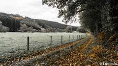 [BDR] Les deux rochers - 05 (Lцdо\/іс) Tags: ballade novembre november 2019 ostbelgien eastbelgium east belgique belgium belgie belgian beautiful automne autumn automnale rocher falize province liège liege malmedy malmédy wild sauvage nature europe europa grey sky gris ciel bellevaux canton est rêve lцdоіс treking tree trekking river warche long explore extérieur exposure outdoor outside travel trip feuilles
