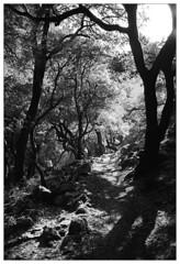 Eichhörnchenpfad (fluffisch) Tags: fluffisch rouvas ida crete greece leica leicam6 summiluxm35f14 preasph summilux 35mm f14 rangefinder messsucher analog film adox silvermax
