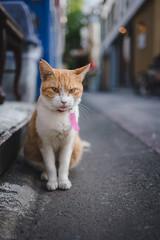 猫 (fumi*23) Tags: ilce7rm3 sony sel35f18f feline fe35mmf18 35mm bokeh dof street alley cat chat gato neko ねこ 猫 ソニー emount