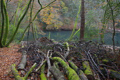 Waggoners Wells (Adam Swaine) Tags: adamswaine autumn autumncolours autumnviews woodland woodlandfloor bark logs trees woods england english naturelovers nature nationaltrust waterside walks britain british uk ukcounties counties hants leaves canon