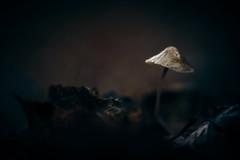 Survivor (micke.vmix) Tags: carlzeiss zeiss d850 makroplanar1002zf makroplanart2100 mushroom