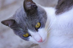 Felix (pasquale di marzo) Tags: gatto felix esterno colore macro