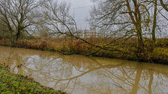 Brinklow Canal Walk 24th November 2019 (boddle (Steve Hart)) Tags: stevestevenhartcoventryunitedkingdomcanon5d4 brinklow canal walk 24th november 2019 steve hart boddle steven bruce wyke road wyken coventry united kingdon england great britain canon 5d mk4 6d 100400mm is usm ii 2470mm standard wild wilds wildlife life nature natural bird birds flowers flower fungii fungus insect insects spiders butterfly moth butterflies moths creepy crawley winter spring summer autumn seasons sunset weather sun sky cloud clouds panoramic landscape