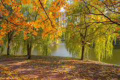 October in Tsaritsyno Park / Октябрь в Царицыно (Vladimir Zhdanov) Tags: autumn october russia moscow landscape nature tsaritsyno park forest wood willow pond water foliage road grass sky leaf people