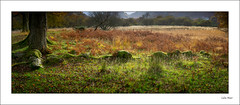 Buried Pano - 2019-11-08th (colin.mair) Tags: derwentwater england lakedistrict panorama rock tree wall border framed grass green remains