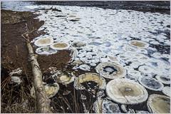 20191126_9867_Ice (Enn Raav) Tags: jääpannkook ice pancake winter jäätaldrik