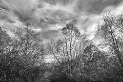 Clouds And Trees (Modkuse) Tags: clouds cloudyday cloudscape cloudy trees nature natural natureart art artphotography artistic artisticphotography photoart fineartphotography fineart bw blackandwhite monochrome acros acrossimulation xh1acrossimulation fujifilm fujinon fujifilmxh1 xh1 fujinonxf1655mmf28rlmwr xf1655mmf28rlmwr forest woods outdoors